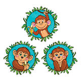Funny monkey with a banana in his hand. Vector set Royalty Free Stock Photography