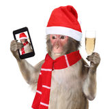 Funny monkey with christmas santa hat taking a selfie and smilin Stock Photography