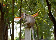 Funny monkey eating an ice-cream. royalty free stock image