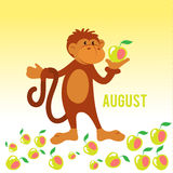 Funny monkey gather apples Stock Photo