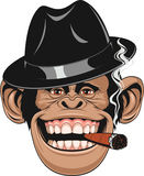 Funny monkey in a hat. Vector illustration of funny chimpanzee hat gangster smoking a cigar and laughing stock illustration