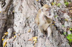 Funny monkey in a natural forest. Stock Images