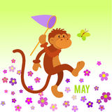Funny monkey preys on butterfly Royalty Free Stock Photo