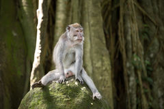 Funny monkey sitting on stone Stock Photo
