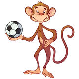 Funny monkey Stock Image