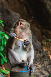 Funny Monkey at Tiger Cave Temple, Krabi Stock Images