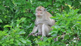Funny monkey in the trees. Stock Photography
