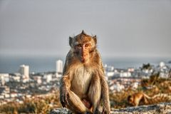 Funny Monkeys from Hua Hin Thailand. This unique image shows wild monkeys in the open air in the evening on a rock in Hua Hin Thailand stock photo
