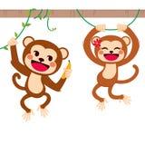 Funny Monkeys On Liana Stock Image