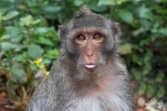 Funny monkeys Stock Photo