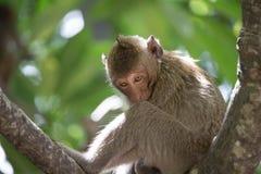 Funny monkeys Royalty Free Stock Photography