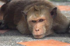 Funny monkeys Stock Images