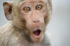 Funny monkeys stock photos