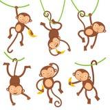 Funny monkeys set Stock Photos