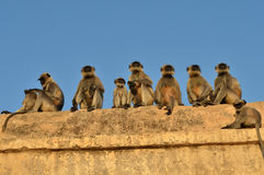 Funny monkeys on the temple Stock Images