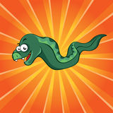 Funny moray. On the orange background Stock Image