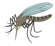 Funny mosquito Stock Photography
