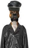Funny Motorcycle Biker Dog Isolated Stock Image