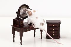 Funny Mouse And Its Reflection In Mirror Royalty Free Stock Photography