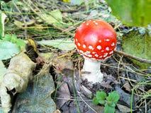 Funny mushroom royalty free stock photos