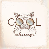 Funny muzzle cat in sunglasses closeup Royalty Free Stock Photos