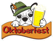 Funny muzzle of french bulldog with beer and ribbon with word Oktoberfest Stock Photo
