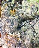 Funny mystery fairy forest troll lichens covered Stock Photography