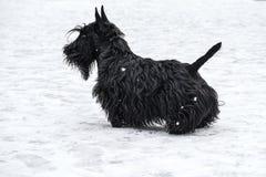Funny naughty dog royalty free stock photo
