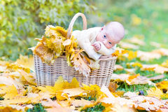 Funny newborn baby in basket with maple leaves Stock Photography
