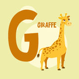 Funny orange giraffe on the background of the letter G Stock Images