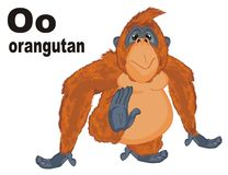 Funny orangutan and abc. Funny orangutan with letters o and her name vector illustration