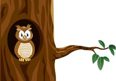 Funny owl cartoon Stock Photo
