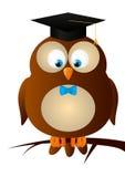 Funny owl Royalty Free Stock Photo