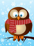 Funny owl Stock Images