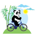 Funny panda bear on bike. Stock Image