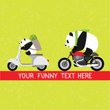 Funny pandas delivery service vector illustration Royalty Free Stock Images