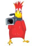 Funny Parrot. Cameraman. Stock Image