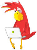 Funny Parrot. Coder. Royalty Free Stock Images
