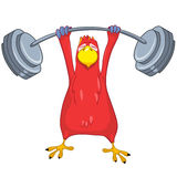 Funny Parrot. Gym Royalty Free Stock Image