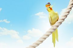 Funny parrot in hat Royalty Free Stock Photography