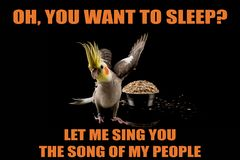 Funny Parrot meme, you want to sleep?, Let me sing you the song of my people. cool memes and quotes. Super cute royalty free stock photos