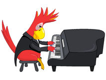 Funny Parrot. Pianist. Stock Photography