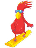 Funny Parrot. Snowboarding Stock Photos