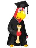 Funny Parrot. Student. Royalty Free Stock Photo