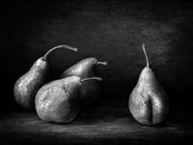Funny pear peeper. As black and white image Royalty Free Stock Images