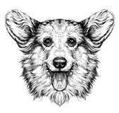 Funny Pembroke Welsh corgi dog. Vintage retro hipster style sketch of funny Pembroke Welsh corgi dog. Royalty Free Stock Images