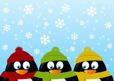 Funny penguins on winter background Stock Images