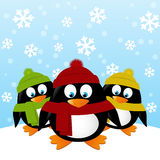 Funny penguins on winter background Royalty Free Stock Images