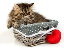 Funny Persian kitten cat is sleeping in the basket with red heart royalty free stock image