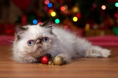 Funny persian kitten with two Christmas ball ornaments stock photo